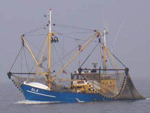 Shrimp Cutter, compl. company due circumstances