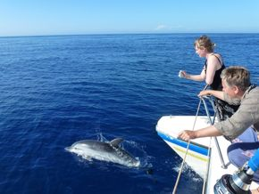 Chasing dolphins in the Med