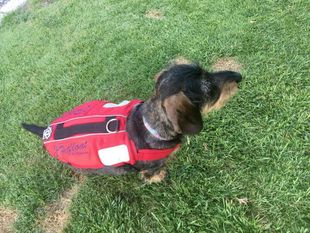 Crewsaver Pet Float (Small Dog)