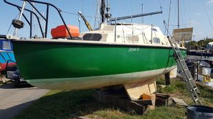 Kingfisher 20 (available)