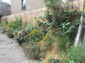 full length of garden
